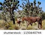 wild mustangs roaming free in...   Shutterstock . vector #1150640744