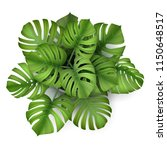 monstera plant in a pot  top... | Shutterstock .eps vector #1150648517