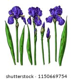 iris flower and leaves drawing. ... | Shutterstock .eps vector #1150669754