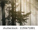 autumn landscape in the fir...   Shutterstock . vector #1150671881