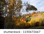 autumn landscape with deciduous ...   Shutterstock . vector #1150672667