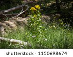 beautiful flowers with forest... | Shutterstock . vector #1150698674