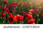 blooming poppy field close up ... | Shutterstock . vector #1150713014