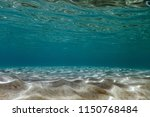 sandy sea bottom underwater... | Shutterstock . vector #1150768484