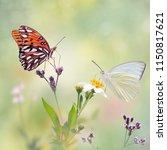 gulf fritillary and great... | Shutterstock . vector #1150817621
