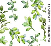 Watercolor boxwood green leaf. Leaf plant botanical garden floral foliage. Seamless background pattern. Aquarelle leaf for background, texture, wrapper pattern, frame or border.