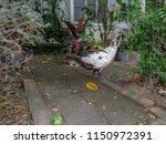 white duck standing on the... | Shutterstock . vector #1150972391