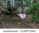 white duck standing on the... | Shutterstock . vector #1150972961