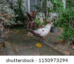white duck standing on the... | Shutterstock . vector #1150973294
