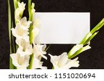 gladioli flowers with white... | Shutterstock . vector #1151020694