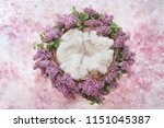 nest of grapevine and lilac... | Shutterstock . vector #1151045387
