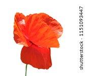 beautiful red poppy. bloom of...   Shutterstock .eps vector #1151093447