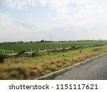 cloudy sky  roads and landscape   Shutterstock . vector #1151117621