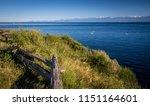 scenes around ogden point... | Shutterstock . vector #1151164601