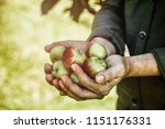 organic fruit and vegetables.... | Shutterstock . vector #1151176331