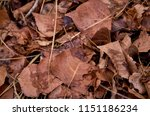 red and brown fallen leaves at... | Shutterstock . vector #1151186234
