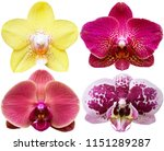 Orchids Isolated White Background Flowers - Fine Art prints