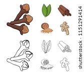 clove  bay leaf  nutmeg ... | Shutterstock . vector #1151291414