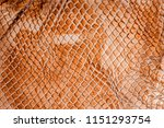 snake skin   texture close up... | Shutterstock . vector #1151293754