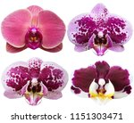orchids isolated on white... | Shutterstock . vector #1151303471