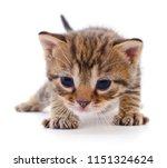 small brown kitten isolated on... | Shutterstock . vector #1151324624