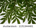 leaf branches and natural... | Shutterstock . vector #1151344481