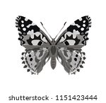 butterfly in gray tatoo style... | Shutterstock .eps vector #1151423444