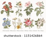 botany. set vintage medical... | Shutterstock .eps vector #1151426864
