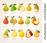 big variety of pears with names.... | Shutterstock .eps vector #1151432264