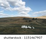 countryside background. gaggle... | Shutterstock . vector #1151467907
