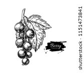 black currant vector drawing.... | Shutterstock .eps vector #1151473841