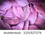 fresh garden leaves bell... | Shutterstock . vector #1151527274