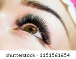 artificial eyelash extensions...   Shutterstock . vector #1151561654