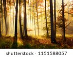 autumn forest landscape | Shutterstock . vector #1151588057