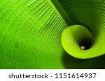 Fibonacci Spiral In Nature...