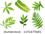 leave set collection on white... | Shutterstock . vector #1151675681