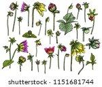 set of fern  leaves and half... | Shutterstock .eps vector #1151681744