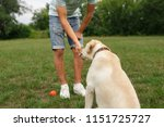 happy young man feeding dog... | Shutterstock . vector #1151725727
