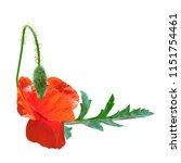 beautiful red poppy. bloom of...   Shutterstock .eps vector #1151754461