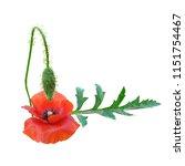 beautiful red poppy. bloom of...   Shutterstock .eps vector #1151754467