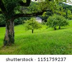 fruits garden and and old... | Shutterstock . vector #1151759237