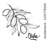 vector image of olive oil fot... | Shutterstock .eps vector #1151778104