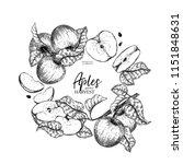 hand drawn banner of aopples.... | Shutterstock .eps vector #1151848631