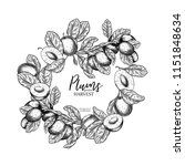 hand drawn banner of plums....   Shutterstock .eps vector #1151848634