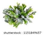bunch of climbing bird's nest... | Shutterstock . vector #1151849657