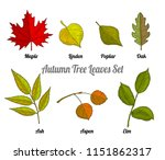 autumn tree leaves set with... | Shutterstock .eps vector #1151862317