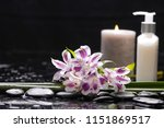 still life with orchid and... | Shutterstock . vector #1151869517