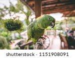 beautiful green parrot with... | Shutterstock . vector #1151908091