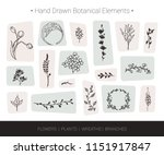 botanical vector design... | Shutterstock .eps vector #1151917847