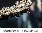 golden  yellow earrings on the... | Shutterstock . vector #1152034361